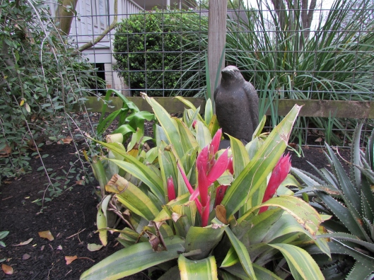 Raven and Bromeliad