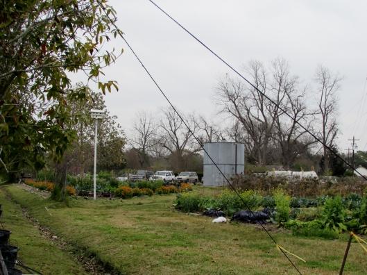 Treesearch Farm veg garden