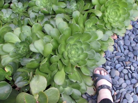 large succulent