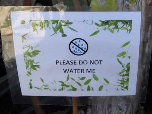 The sign in the cactus lets you know not to pour you water bottle into it : )