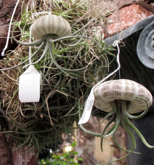 Pricey but so much fun! I thinking about doing this with some of my tillandsias.