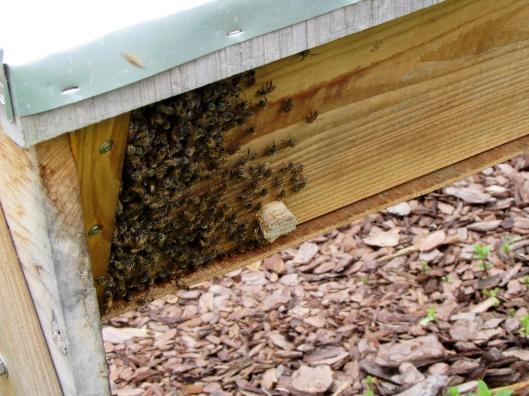 Heights bee hive