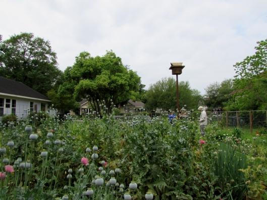 Tour of bee habitat in Houston Heights