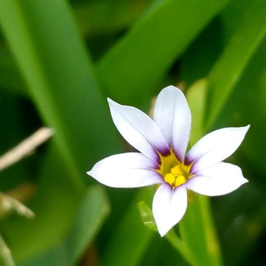 small flower blade of grass