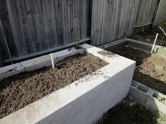 irrigation in cinder block raised bed