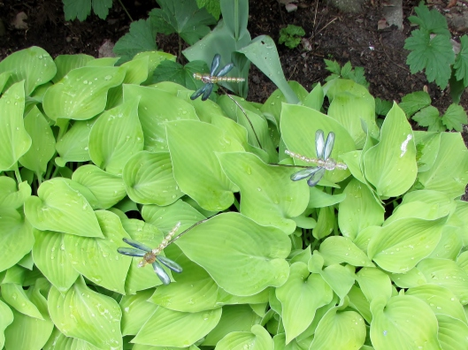 hostas and dragonflies