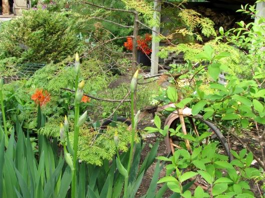 trike in garden