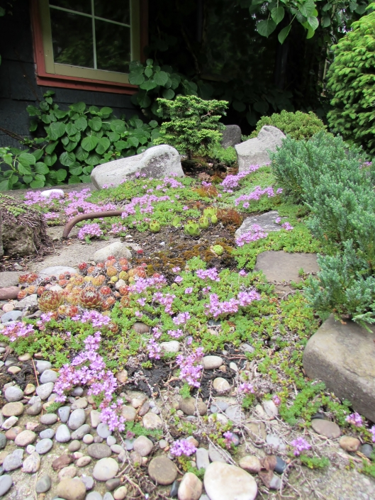 dry stream with succulents