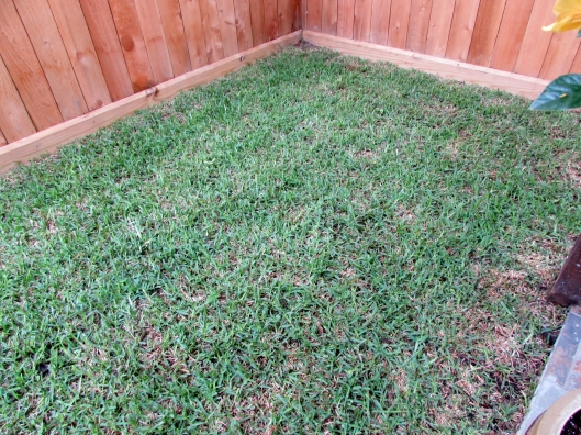 tiny grass patch