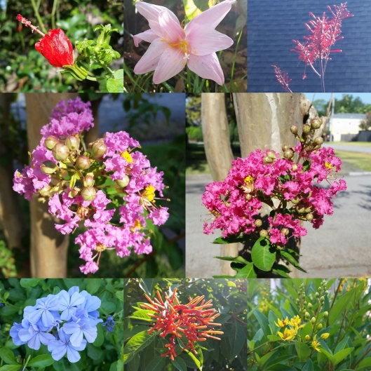 Flowers of August 2