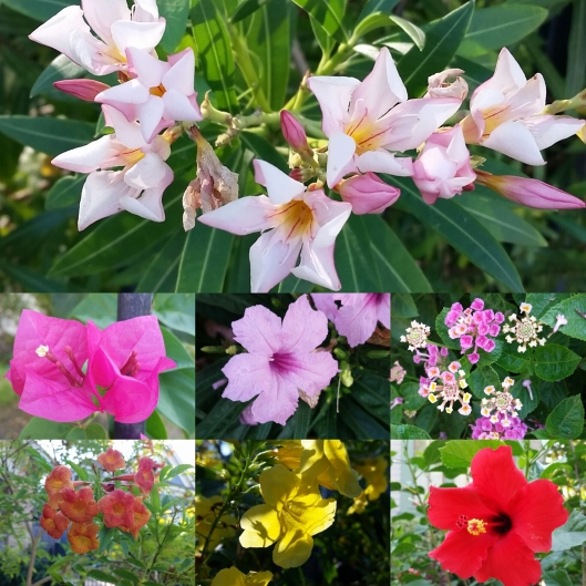 Flowers of August