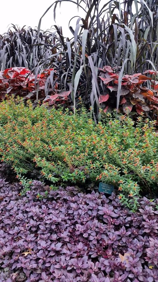Layers of color at Dallas Arboretum