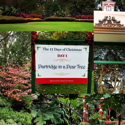 Twelve Days of Christmas at the Dallas Arboritum