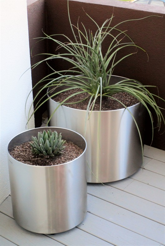 Containers, Red Yucca and Regina agava