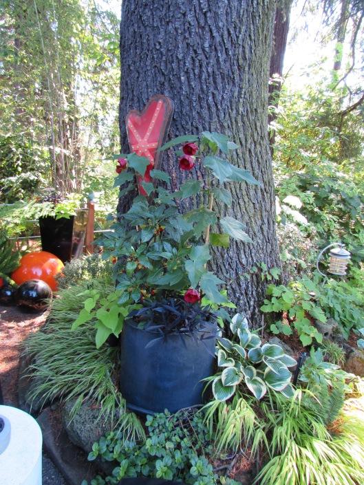 Abutilon at JJ DE Sousa's Garden