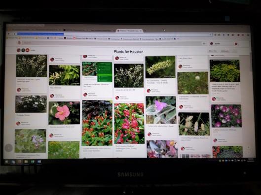 Pinterest Plants for Houston