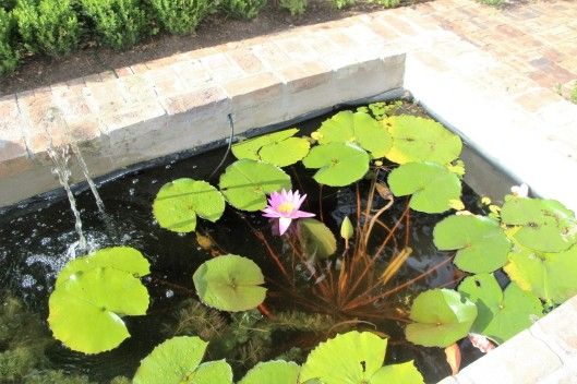 Brick pond with water lily.