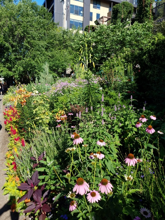 Vera's Garden. This exceptional community garden backs up to the Midtown Greenway, a 5-mile bike route that runs through the heart of Minneapolis